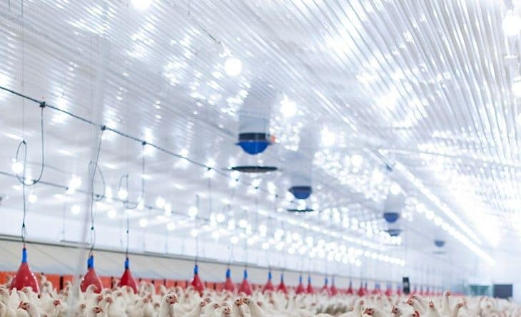 Livestock industry technologies